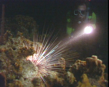 Night Dive - Diver and Sea Urchin
